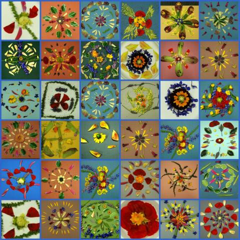 Images of many types of flower petals shaped into various patterns