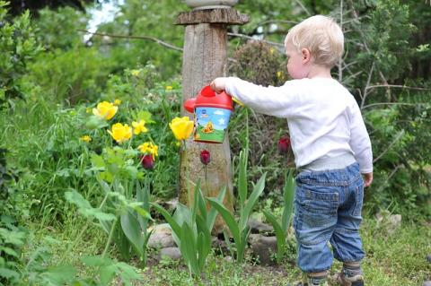 Toddler with watering can in the garden.